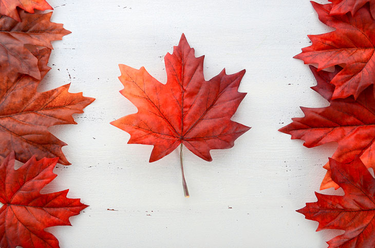 red silk leaves in shape of Canadian Flag